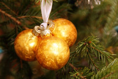 Christmas ball on green pine Royalty Free Stock Photos