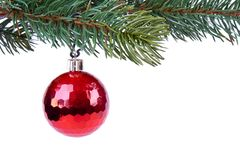 Christmas ball on green spruce branch Royalty Free Stock Photography