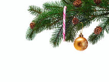 Christmas ball on green spruce branch Stock Photos
