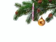 Christmas ball on green spruce branch.  Stock Photos