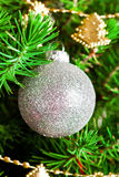 Christmas ball and green spruce branch Royalty Free Stock Photography