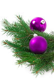 Christmas ball and green spruce branch Royalty Free Stock Photos