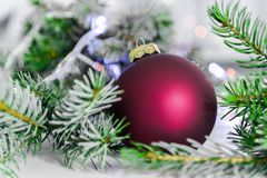Christmas ball and green spruce branch on  white Stock Photography