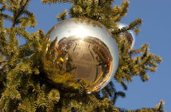 Christmas ball in green tree Stock Photo