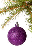 Christmas ball hanging from a branch of a fir tree Royalty Free Stock Photos