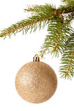Christmas ball hanging from a branch of a fir tree Stock Photography