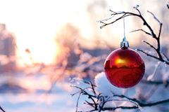 Christmas ball hanging on a branch in winter Royalty Free Stock Photo