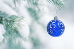 Christmas ball hanging on frosty fir tree. Royalty Free Stock Image