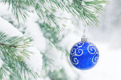 Christmas ball hanging on frosty fir tree. Royalty Free Stock Photo