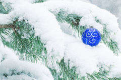 Christmas ball hanging on frosty fir tree. Royalty Free Stock Photography