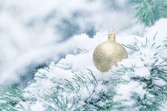 Christmas ball hanging on frosty fir tree. Stock Images