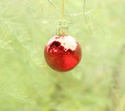 Christmas ball hanging on the pine tree Royalty Free Stock Photo