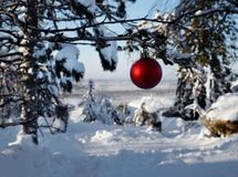 Christmas ball. Christmas and new year`s fur-tree toy on forest tree. Stock Photo