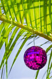Christmas ball on palm tree Royalty Free Stock Photo