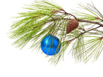 Christmas ball on pine branch Royalty Free Stock Image