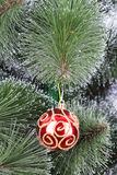 Christmas ball pine tree branch Stock Images