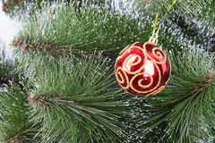 Christmas ball pine tree branch Royalty Free Stock Photo