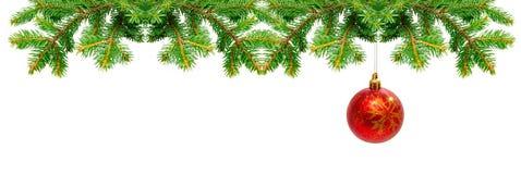 Christmas ball. Christmas tree branches and Christmas ball isolated Royalty Free Stock Photography