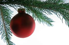 Christmas Ball on Tree, closeup. Elegant Deep Red Christmas Ball hanging from an Evergreen Tree Branch stock image