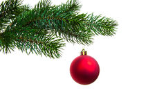 Christmas ball on twig of evergreen royalty free stock image
