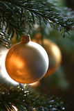 Christmas balls. Hanging  in a christmas tree Royalty Free Stock Image