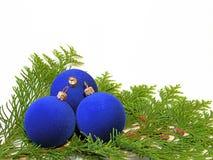 Christmas balls. On the thuja branch Stock Image