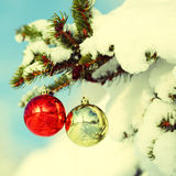 Christmas Balls on Christmas tree branch covered with Snow Royalty Free Stock Photography
