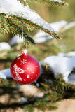 Christmas balls on outdoor snowy tree Stock Images