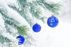 Christmas balls on a pine tree frosty in the snow. Stock Photography
