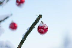 Christmas balls on pine tree Stock Images