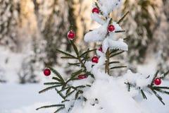 Christmas balls on pine tree Stock Photography