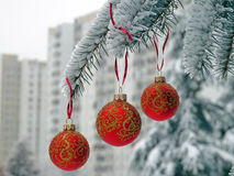 Christmas balls on the snow spruce Royalty Free Stock Photo