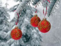 Christmas balls on the snow spruce Royalty Free Stock Photography