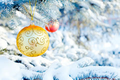 Christmas balls on a spruce branch Stock Images