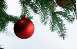 Christmas Balls on Tree. Elegant Deep Red Christmas Balls hanging from an evergreen tree stock image