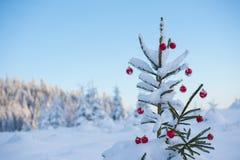 Christmas balls on tree Stock Photos