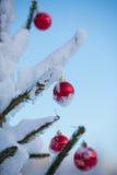 Christmas balls on tree Stock Images
