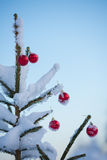 Christmas balls on tree Royalty Free Stock Photos