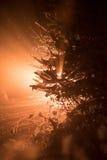 Christmas balls on tree Royalty Free Stock Image