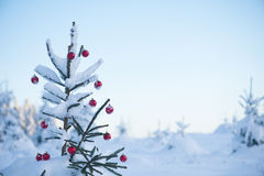 Christmas balls on tree Stock Photography