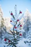 Christmas balls on tree Stock Image