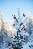Christmas balls on tree Royalty Free Stock Images