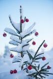 Christmas balls on tree Royalty Free Stock Photo