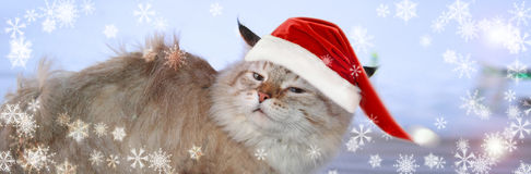 Christmas banner, cat santa Stock Photo