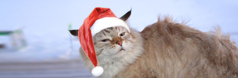 Christmas banner, cat santa Royalty Free Stock Photo