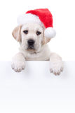 Christmas Banner Dog Stock Photo