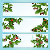 Christmas banner with holly berry and fir branches Stock Image