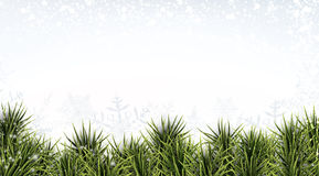 Christmas banner with spruce twigs Royalty Free Stock Photo