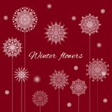 Christmas Banner Winter Flowers On Claret Background. Christmas Banner Winter Flowers With White Snowflakes On Claret Background Royalty Free Stock Images
