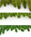 Christmas banners with spruce branches. Stock Images